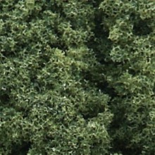 Foliage Cluster medium green
